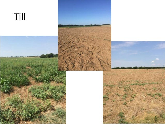 Component separations from 2016 TillCC and NTCC paddocks. 0.58 0.15 0.26 cover crop litter other 0.11 0.46 0.43 cover crop...