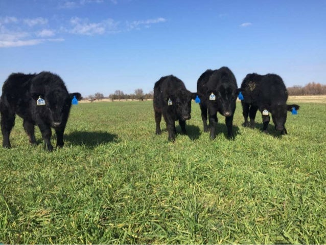 Objectives 1. Measure the impact of a summer cover crop (grazing cover) on winter pasture production. 2. Monitor change in...