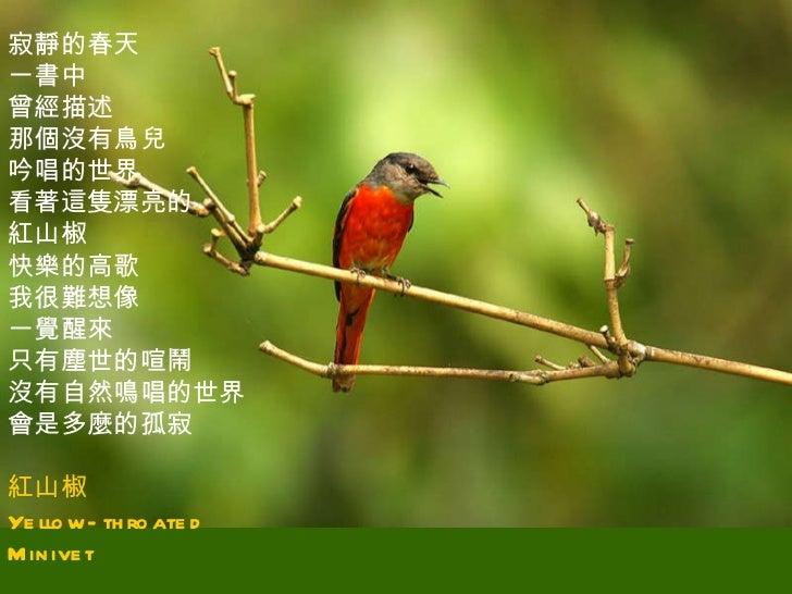 素蘭的鳥相簿-14(Jun_06) Slide 3