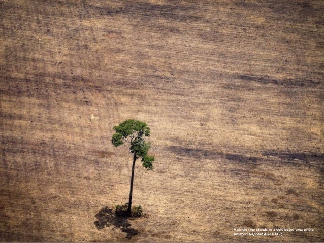 A single tree stands in a deforested area of the Amazon(Raphael Alves/AFP)