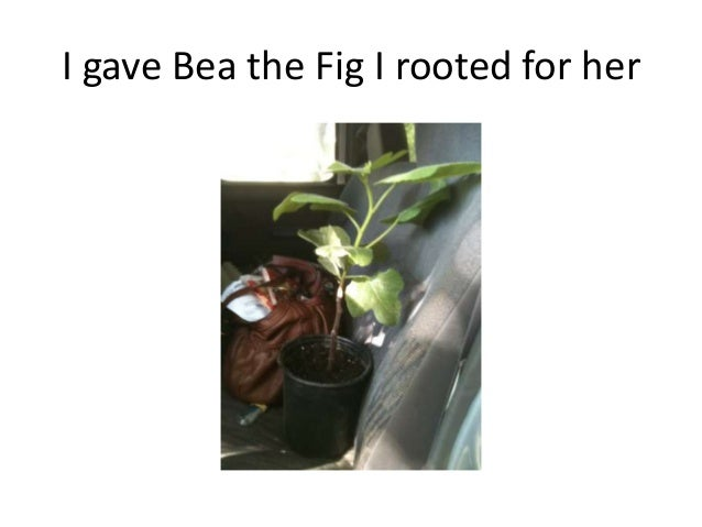 I gave Bea the Fig I rooted for her