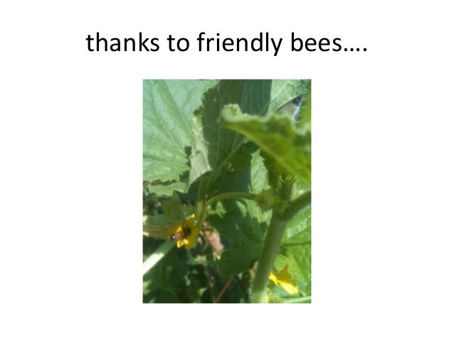 thanks to friendly bees….