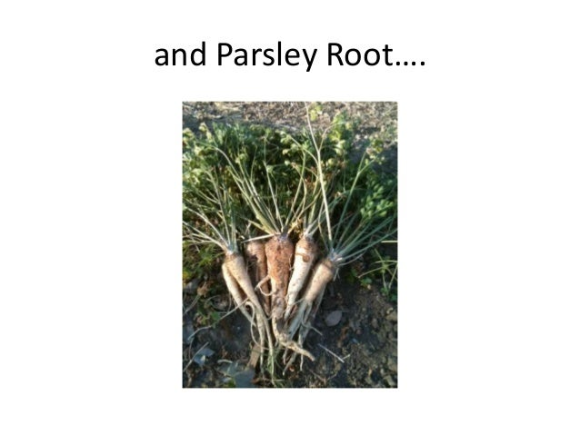 and Parsley Root….