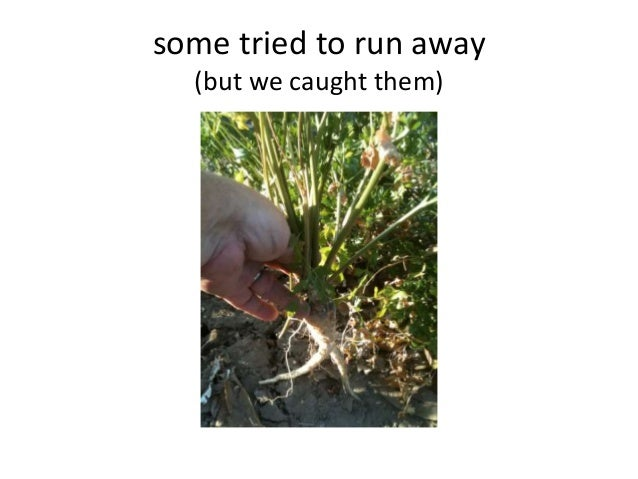 some tried to run away(but we caught them)