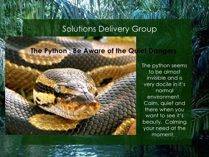 Solutions Delivery Group The Python : Be Aware of the Quiet Dangers The python seems to be almost invisible and is very do...