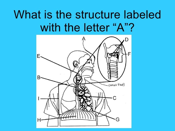 "What is the structure labeled with the letter ""A""?"