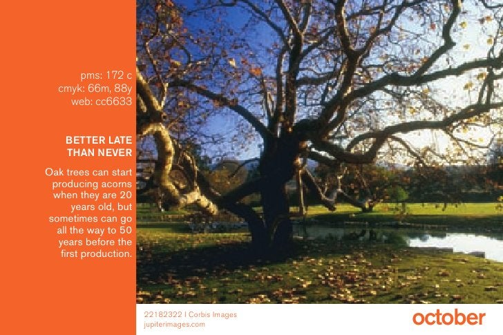 pms: 172 c    cmyk: 66m, 88y      web: cc6633       BETTER LATE     THAN NEVER Oak trees can start  producing acorns  when...