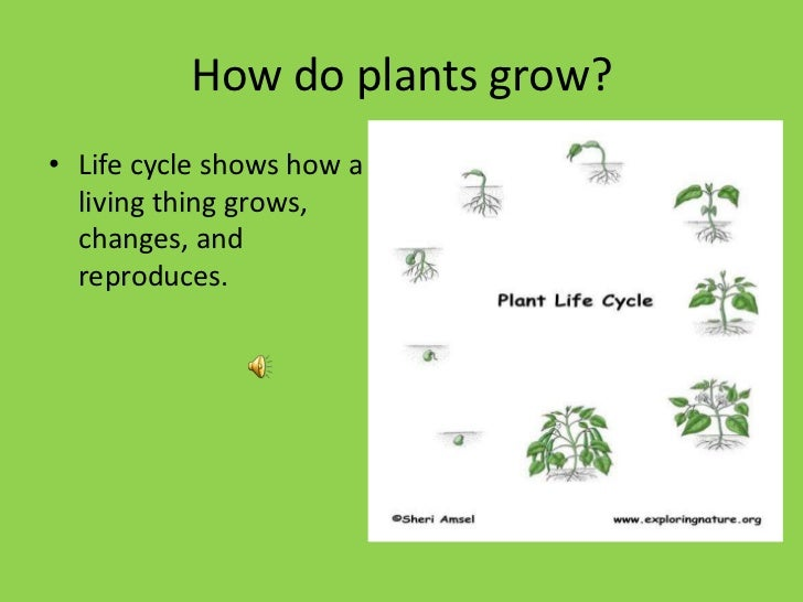Jurica Eded-3308 Plant Life Cycle [Autosaved]