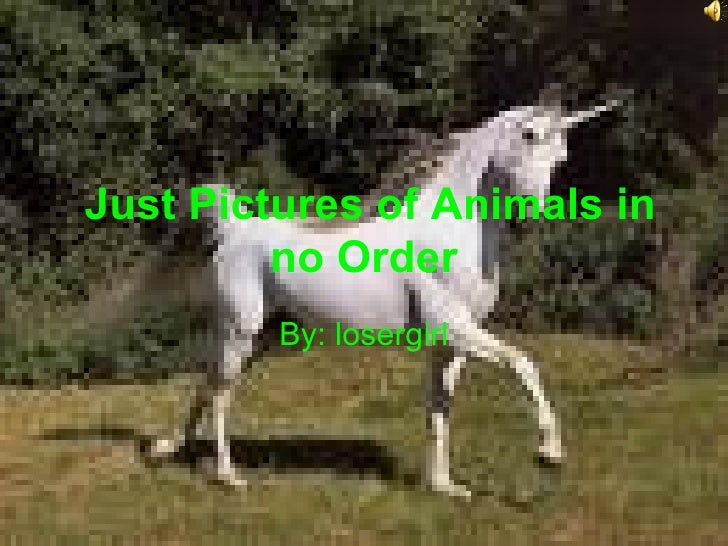 Just Pictures of Animals in no Order By: losergirl