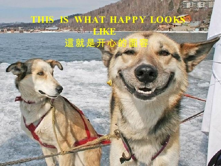 THIS IS WHAT HAPPY LOOKS LIKE  這就是开心的面容