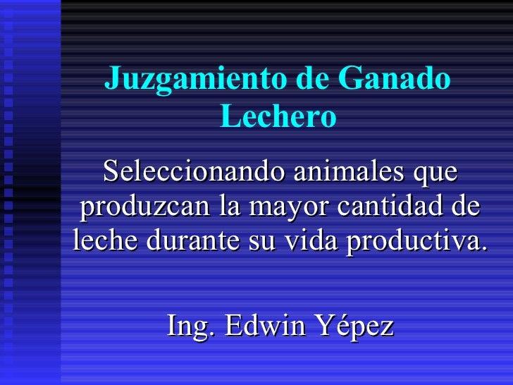 Juzgamiento de Ganado Lechero Seleccionando animales que produzcan la mayor cantidad de leche durante su vida productiva. ...