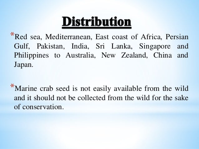 a description of the blue crab the beautiful savory swimmer Blue swimmer crab (portunus pelagicus) fishery fishery assessment report to pirsa for the blue crab fishery management committee 2004 description.
