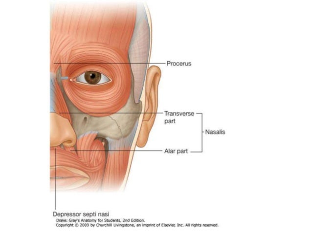 kortikosteroid tedavisinin yan etkileri