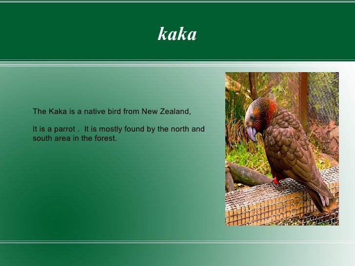 kaka The Kaka is a native bird from New Zealand, It is a parrot .  It is mostly found by the north and  south area in the ...