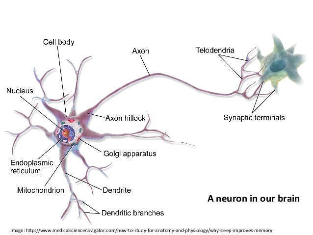 Classical+representa4on+of+a+neuron++ Long+short&term+memory+cells++
