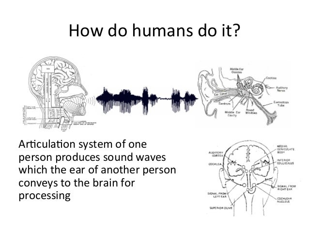 How+do+humans+do+it?+ Ar4cula4on+system+of+one+ person+produces+sound+waves+ which+the+ear+of+another+person+ conveys+to+t...