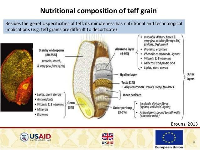 ... endosperm proportion; 6. 6 Nutritional composition of teff grain ...