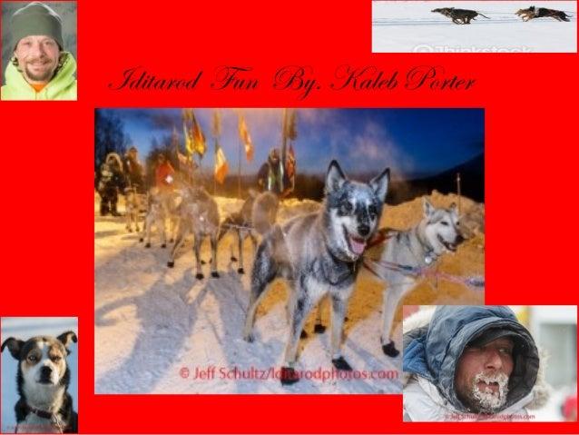 Iditarod Fun By. Kaleb Porter