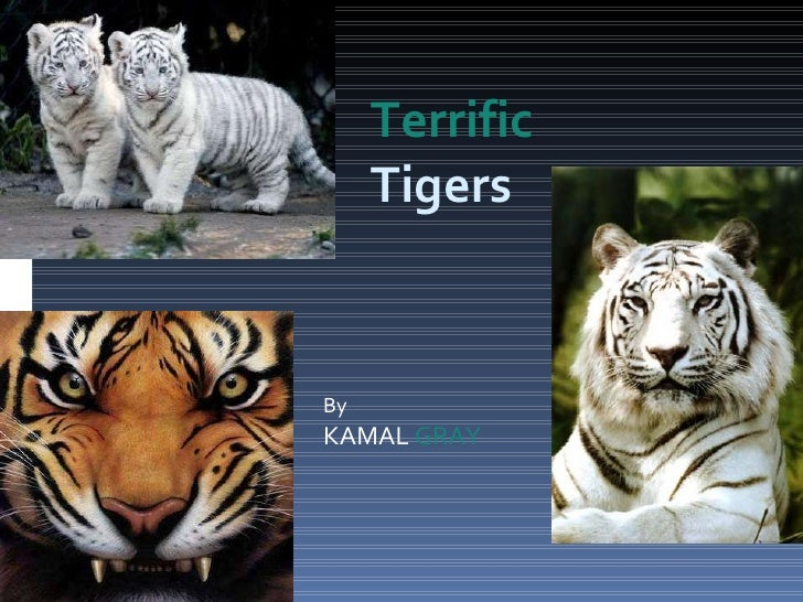 By KAMAL  GRAY Terrific  Tigers