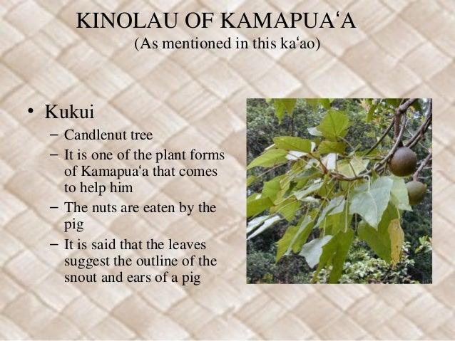 Kamapuaʻa  Slide 3
