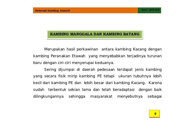 Peluang Usaha Bisnis Budidaya Ternak Kambing Dan Domba, PE Kaligesing, Boer, Jawa Randu, Merino