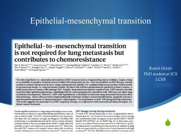 S Epithelial-mesenchymal transition Kamil Grzyb PhD student at ICS LCSB