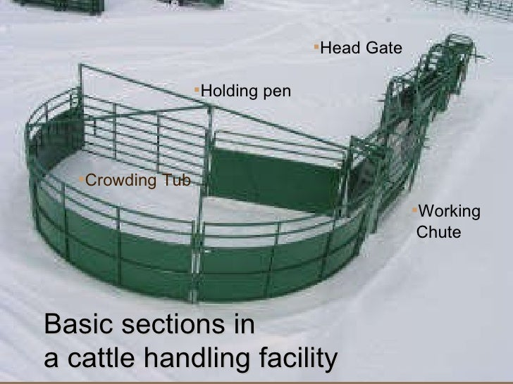 Tips for Creating Beef Cattle Handling Facilities