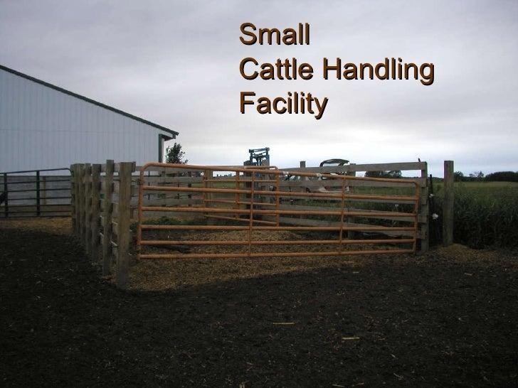 Beef Cattle Working Facility Designs Joy Studio Design