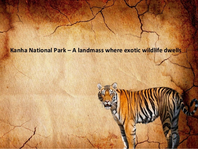 Kanha National Park – A landmass where exotic wildlife dwells