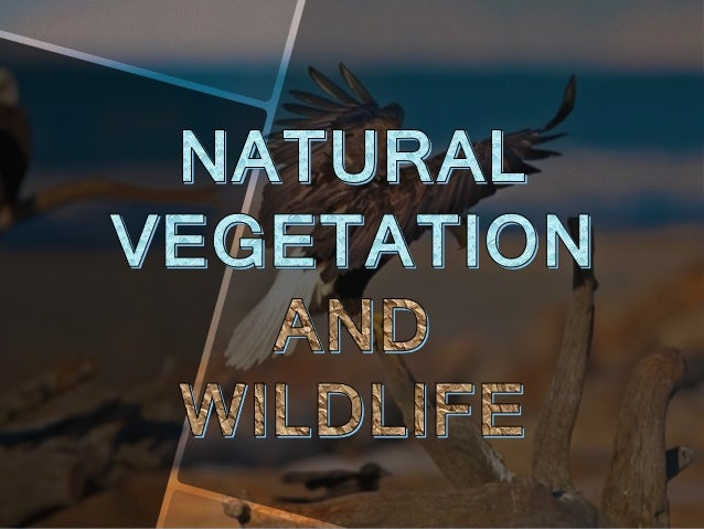 Natural vegetation refers to the garment of plants and trees that exists in the area before it is modified by Man for acti...