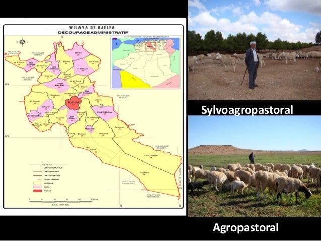 Les leviers de flexibilité activés par les agropasteurs de Djelfa pour faire face au changement climatique - KANOUN Slide 3