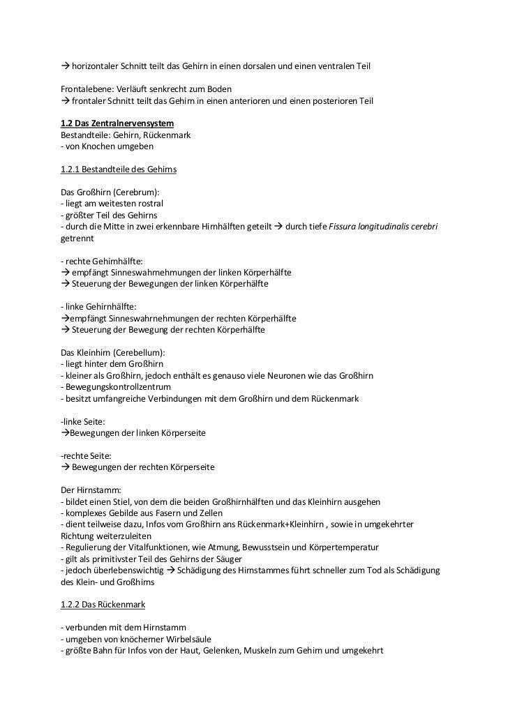 Großzügig Anatomie Kapitel 7 Nervensystem Antwortschlüssel Galerie ...