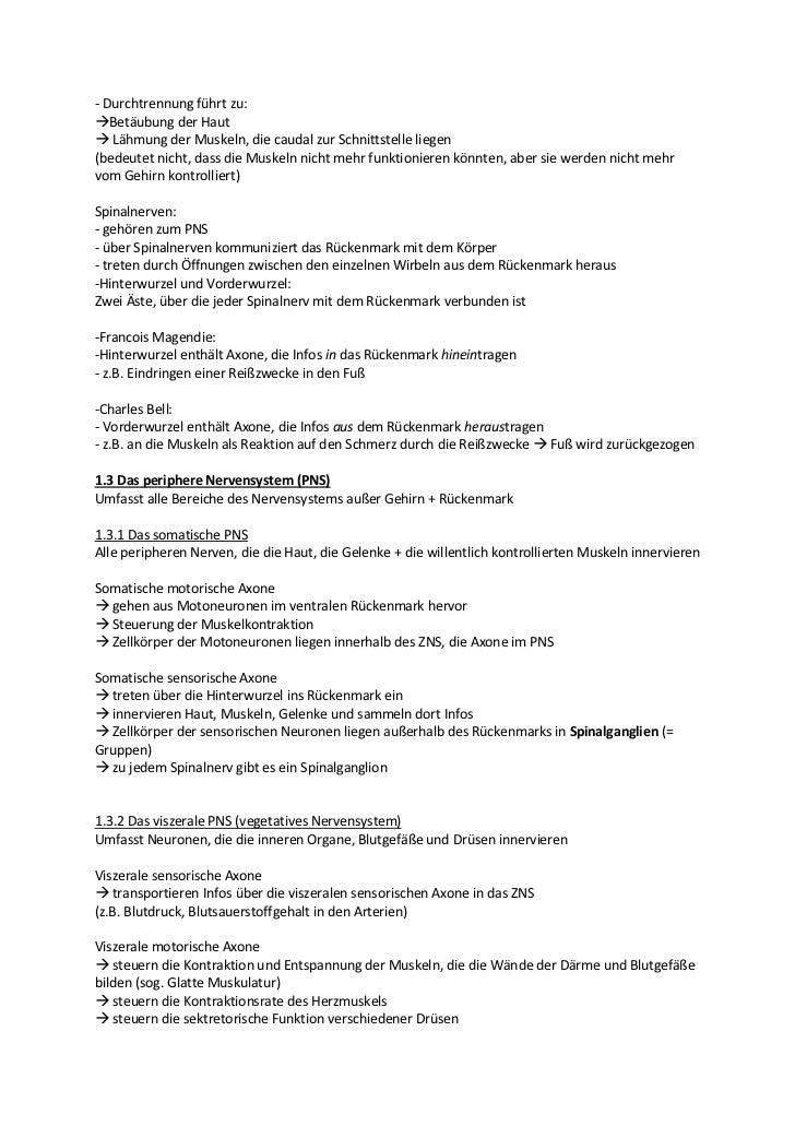 Beste Spinalnerv Bilder - Menschliche Anatomie Bilder - madeinkibera.com