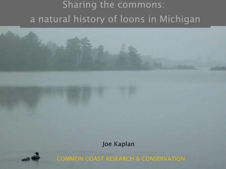 Sharing the commons:  a natural history of loons in Michigan Joe Kaplan COMMON COAST RESEARCH & CONSERVATION