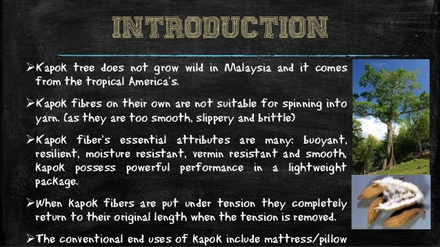 INTRODUCTION Kapok tree does not grow wild in Malaysia and it comes from the tropical America's. Kapok fibres on their o...