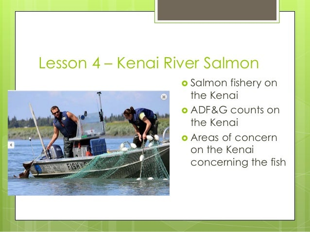 Kara salmon make the kenai go round for Kenai river fish counts