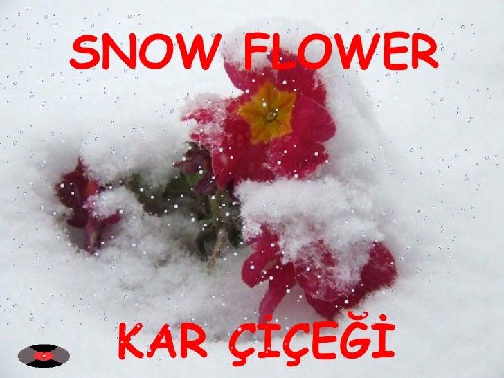 KAR ÇİÇEĞİ SNOW FLOWER