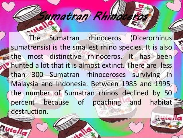 Report Text Quot Sumatran Rhinoceros Quot Soal