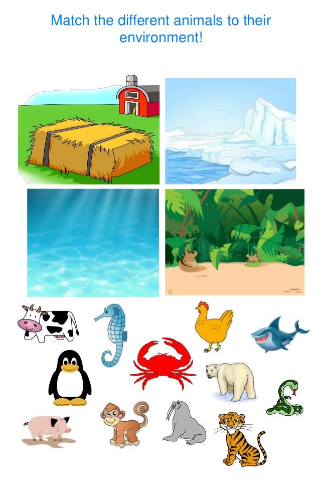 Match the different animals to their environment!