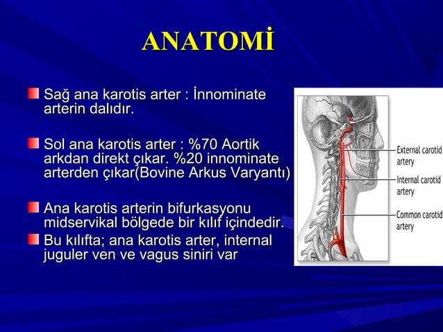 ANATOMİANATOMİ Sağ ana karotis arter : İnnominateSağ ana karotis arter : İnnominate arterin dalıdır.arterin dalıdır. Sol a...