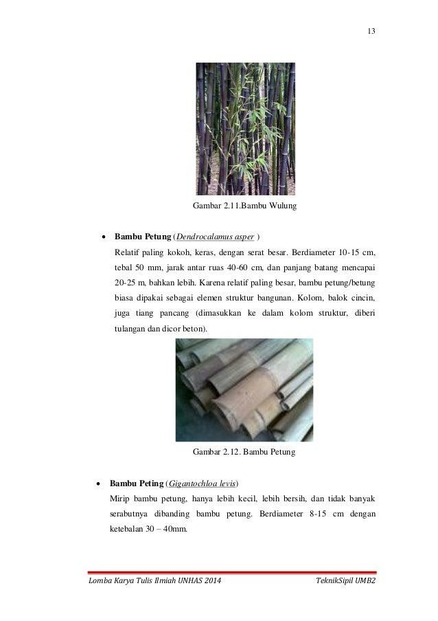13 Lomba Karya Tulis Ilmiah UNHAS 2014 TeknikSipil UMB2 Gambar 2.11.Bambu Wulung  Bambu Petung (Dendrocalamus asper ) Rel...