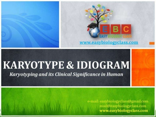 For detailed description of this topic, please click on: http://www.easybiologyclass.com/karyotype-and-idiogram-definition...