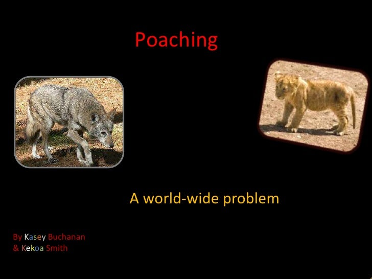 Poaching                    A world-wide problemBy Kasey Buchanan& Kekoa Smith
