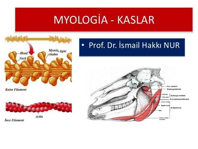 MYOLOGİA - KASLAR • Prof. Dr. İsmail Hakkı NUR