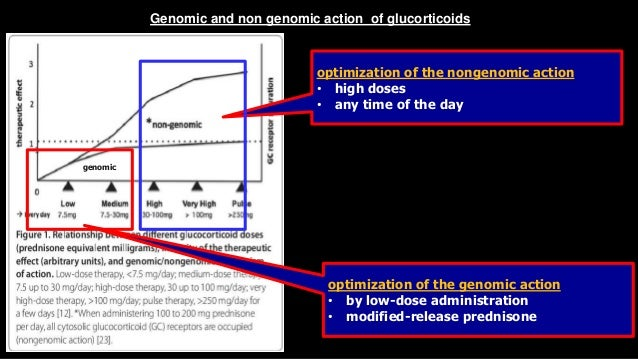 nongenomic effects of steroids