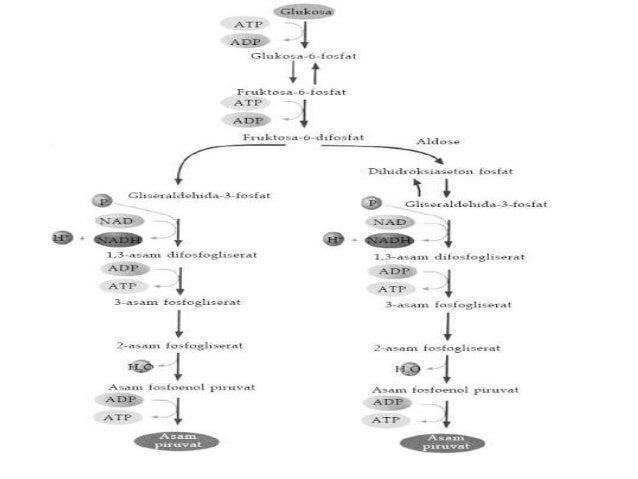 Katabolisme 7 2 dekarboksilasi oksidatif merupakan reaksi ccuart Choice Image