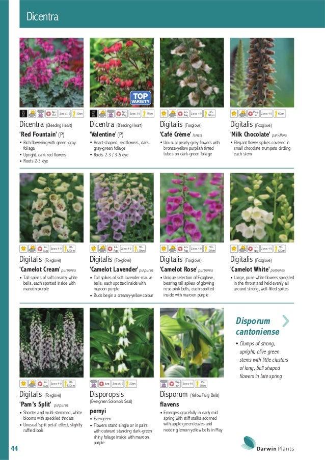 Darwin Plants 2015