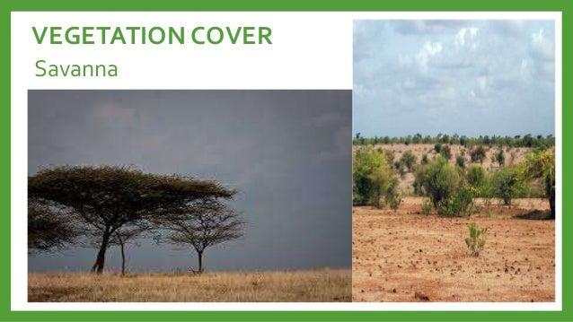 vegetation cover ng kanlurang asya Mga vegetation cover sa asya 1 steppe 2 steppe• uri ng damuhang may  ugat na mababaw o shallow- rooted short grasses.