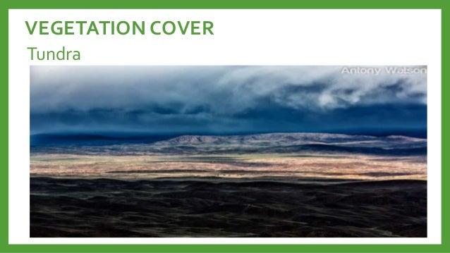 Vegetation cover ng kanlurang asya College paper Sample