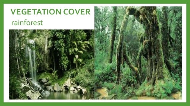 Vegetation cover ng kanlurang asya College paper Sample